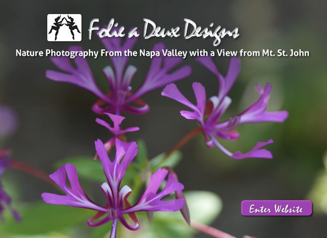 Folie a Deux Designs Website Design